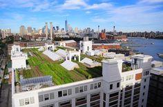Conoce el huerto de cultivo líder en el negocio de techos #verdes en #Estados Unidos (Brooklyn Grange Farm). #Hogaressauce.
