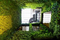 Loewe   Vertical Garden Design ~ looking up at four walls of a small courtyard in Loewe's Barcelona store.