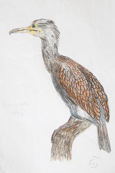 cormorant bird drawing