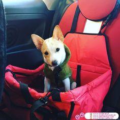 Fleece für kleine Hunde im Grün #Hunde - Fleece für kleine Hunde, sehr einfach und praktisch; er hat eine Kapuze, aber keine Ärmel; Sie können auf Ihrem Hund im Haus und außerhalb zu tragen