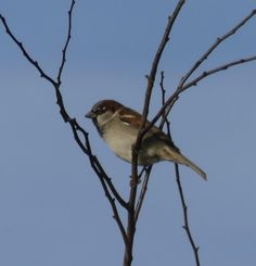 Lola, aged 11, managed to get this snap of a sparrow