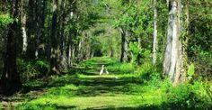 Naples Bird Rookery Swamp: It's a beaut for hiking, biking, wildlife