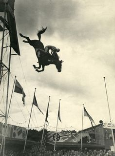 Horse high diving. This would be soooooo scary!!