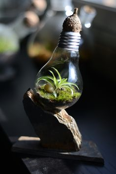 Spider plant in lamp