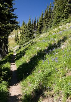 The Pacific Crest Trail in between Harts Pass and Windy Pass by Matt McGrath Photography, via Flickr - Barron, Washington