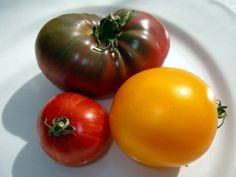 Whether Heirlooms or Hybrids are your tomato of choice, you must choose tomato varieties that are well suited to your growing environment.