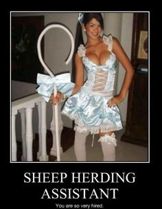 And I don't have sheep.