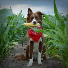"""""""Here in the Midwest, you can pick yourfood and play with it, too.Is there anything sweeter?"""""""