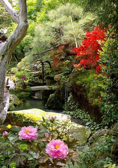 Japanese garden in Kyoto