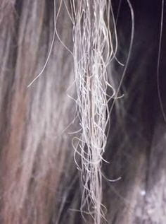 Feirinha Chic : Cabelos porosos - Como identificar e como tratar