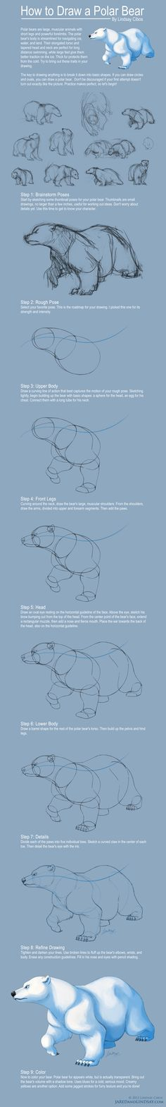 How to Draw a Polar Bear by LCibos.deviantart.com on @deviantART