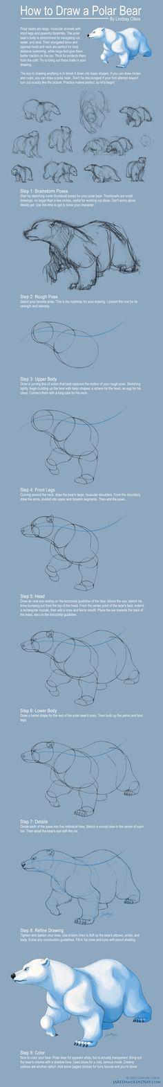 drawing tips - クマの描き方 Polar Bear