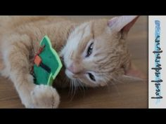 CATS WITH BOWTIES! | KitNip Box Unboxing