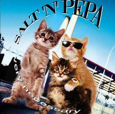 Kitten Covers - oh yeaaaah....  Soft-n-Purra