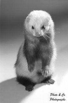 Dramatic, bold, fresh!!!!!! And ferret-y.