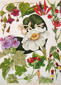 Výsledek obrázku pro flowers old drawings