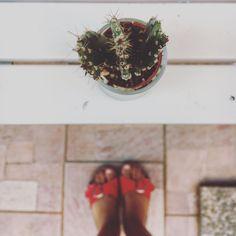 #cactus addicted