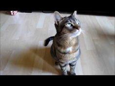 Clickern mit Katzen: 19 Tricks! - YouTube