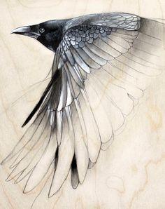 raven study art drawing small art print by TheHauntedHollowTree, $15.00
