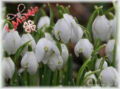 Parfumul minunat al florilor de primavara, roua diminetilor calde si adierea vantului bland, sa va patrunda in suflet, sa va incalzeasca si sa va umple de bucurie, fericire si iubire !