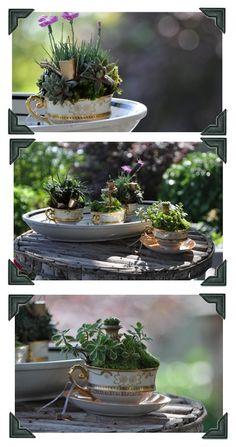 adorable tea cup gardens