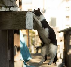 Japanese Photographer Documents The Quite a few Faces of Tokyo's Stray Cats