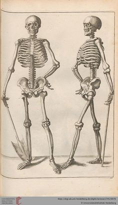 "Gérard de Lairesse, Skeletons from ""New School in the Art of Drawing"", 1745. Leipzig. #medical #medicine #illustration #vintage #skeleton #skulls #bones"