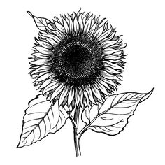 A sunflower stamp, freshly picked from the Classic Stampington Collection — a natural selection for summertime! Sunflower Garden, Wood Carving Patterns, Natural Selection, Gift Coupons, Digi Stamps, Copic Markers, Pyrography, Ink Art, Mixed Media Art