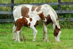 Pretty Pic  <3 <3 <3 horsies Donkeys, Horses, Pretty, Painting, Animals, Animales, Animaux, Painting Art, Donkey