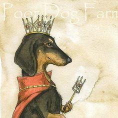 dachshund#
