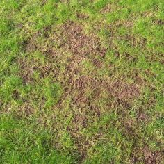 """When to sow grass in bare soil: """"Dormant seeding involves putting down seed while the ground is not frozen, yet cold enough so germination of the grass seed will not occur until next spring when the soils begin to warm."""