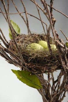 Country Living with bird nest and eggs in brown and green Nester, Bird Cages, Bird Nests, Egg Birds, Photo Animaliere, Egg Nest, Little Birds, Wild Birds, Bird Watching
