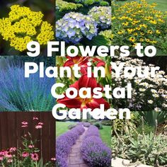 9 Must Plant Flowers in Your Coastal Garden – Beach Expressions Seaside Garden, Coastal Gardens, Beach Gardens, Beach Theme Garden, Seaside Beach, House Landscape, Beach Landscape, Landscape Design, Garden Design
