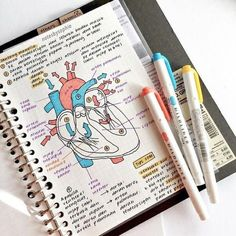 notes school notes textbook notes pretty notes notes design biology notes studyblr notes history notes sociology notes a Nursing School Notes, College Notes, Nursing Schools, Medical School, Math Notes, Science Notes, Revision Notes, School Organization Notes, Study Organization