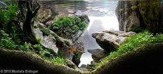 Plants:Fissidens fontanus, Willow moss, String moss, Mini Taiwan moss, Christmass moss, Mini pellia, Riccia fluitans, Staurogyne repens, Hydrocotyle sp.