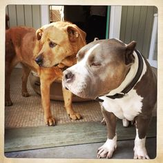 When Love Hurts (The Fallout of Spoiling)   The Good Dog Life Blog