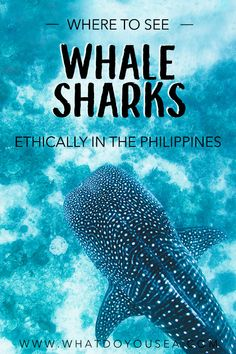 Is it possible to swim with whale sharks ethically in the Philippines? By avoiding Oslob and Donsol, I found an absolute gem of a tour nestled in the eastern islands. THIS is the best place to see whale sharks ethically in the Philippines and Voyage Philippines, Les Philippines, Philippines Travel, Palawan, Siargao, Backpacking Europe, Bora Bora, Belize, Bangkok