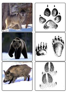 Arctic Animals, Forest Animals, Animal Activities For Kids, Dragon Comic, Animal Footprints, Animal Tracks, Teacher Cards, Winter Crafts For Kids, Preschool Christmas