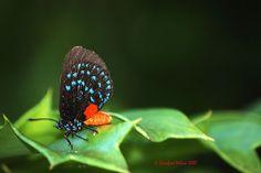 Fairchild Gardens butterfly
