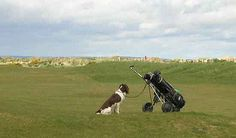 dogs on st andrews golf course | Canine friends are welcome on many golf courses in Scotland