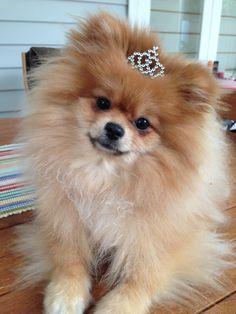 My princess Teddi
