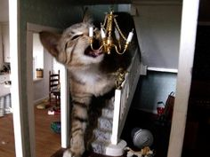 So, cats breaking into dollhouses is a thing