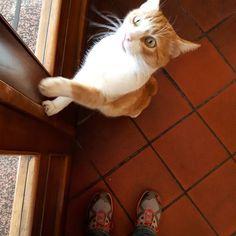 Io e Luciano pronti per il trekking (notare le mie scarpe) #catsofgrosseto #catsofinstagram