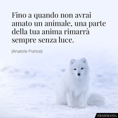 Frasi sugli Animali: le 25 più belle (in inglese e italiano) Pet Loss Quotes, Freedom Life, Anatole France, Italian Quotes, Little Dogs, Say Hi, Dog Love, Animals And Pets, Life Quotes