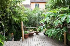 It is possible to get a tropical look without having to wrap your plants in bubble wrap every winter! These are the top tropical-looking plants for a colder climate.