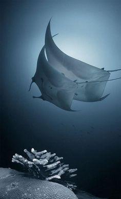 amazing underwater photography | Amazing Underwater Photography #sea #sealife #underwater
