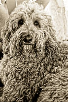 Daily Dog: Sam