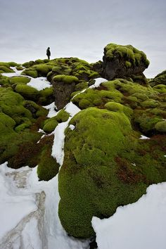 green.  moss. ice. winter. cold. scenery. nature. photograph. | RP » [iceland].