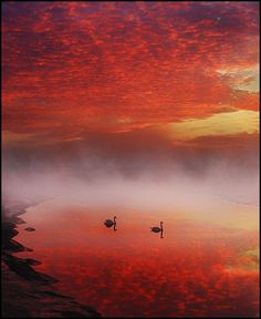 Floating on lava by adrians_art, via Flickr   >lava swans