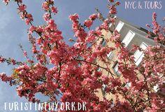 Spring is in the air // Forår i luften!  Hello from #Queens  #nycandtours #turistinewyork #seemycity #newyork #newyorkcity #nyc #ny #spring #nature #beautifulnewyork #dansk #danmark #danskerinewyork #tourguide #onlineconcierge #personalizedNYC